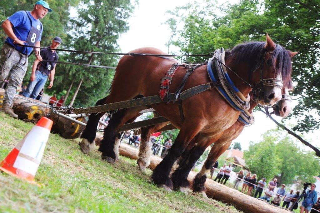 furmanske_preteky2019_16.jpg